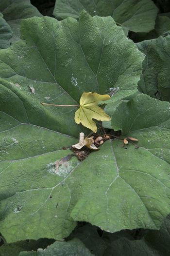 Green Leaves🌿 Urban Nature Leaf Leaves No People Park Plant ørstedsparken