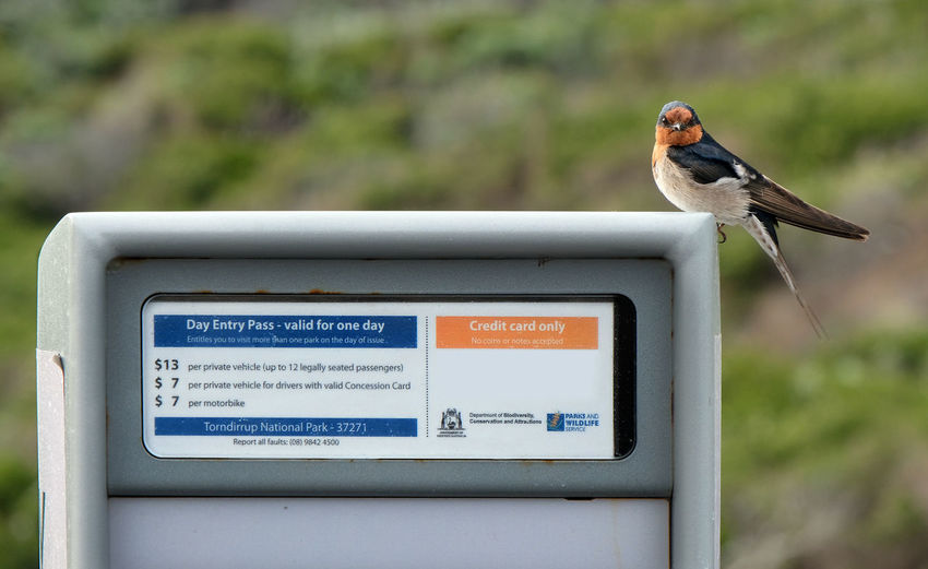 Welcome Swallow Welcoming Fee Station Torndirrup National Park Animal Themes Bird Animal Wildlife Animals In The Wild Text Focus On Foreground No People Communication Day Perching Close-up Guidance Nature Western Australia