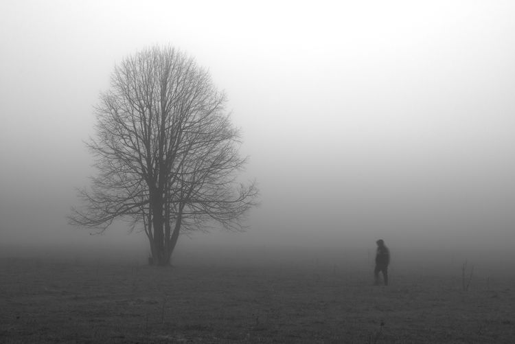 Silhouette bare tree on field against sky during foggy weather