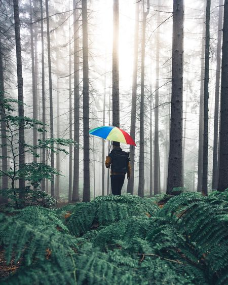 Woman standing by trees in forest during rainy season