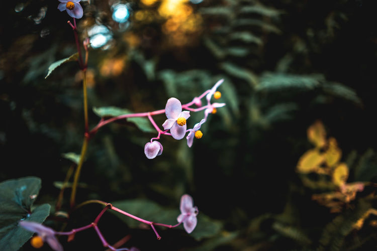 Flowers in the woods. Plant Flower Growth Vulnerability  Flowering Plant Fragility Beauty In Nature Close-up Nature Petal Focus On Foreground No People Freshness Inflorescence Flower Head Leaf Day Outdoors Plant Part Selective Focus