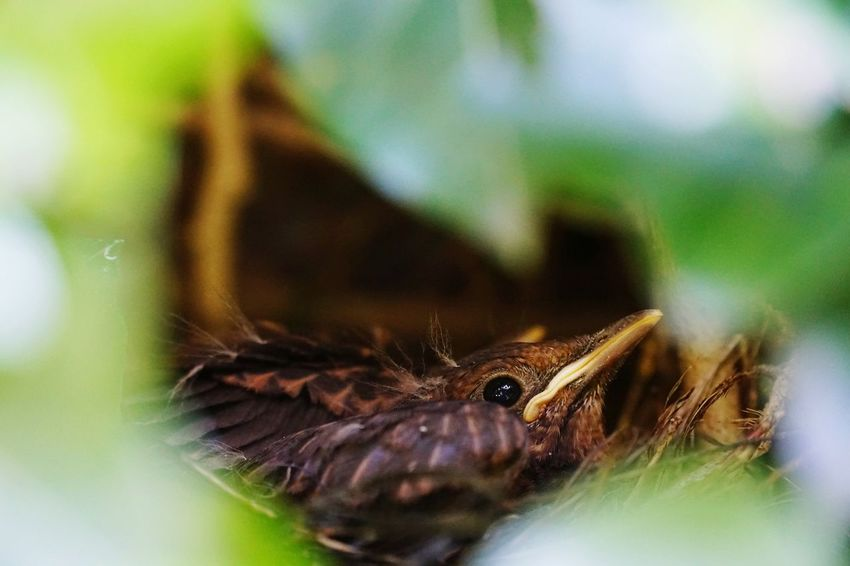 One Animal Animal Wildlife Animals In The Wild Animal Themes No People Close-up Nature Day Outdoors bird nest Bird Nests Young Birds In Nest