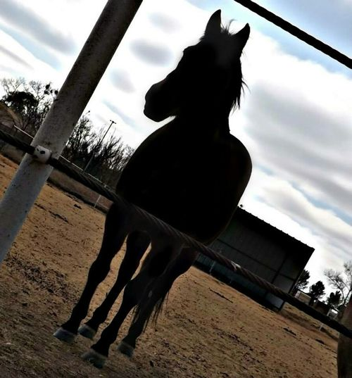 I Love Horses Animal Photography Horse Life Animalposing Horses Farm Animals Animal_collection Sillouette Shadow-art