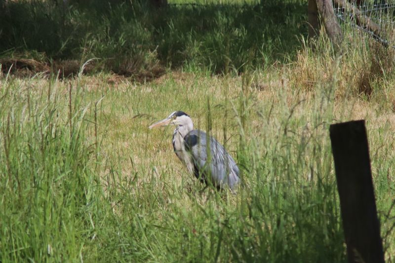 Heron by the
