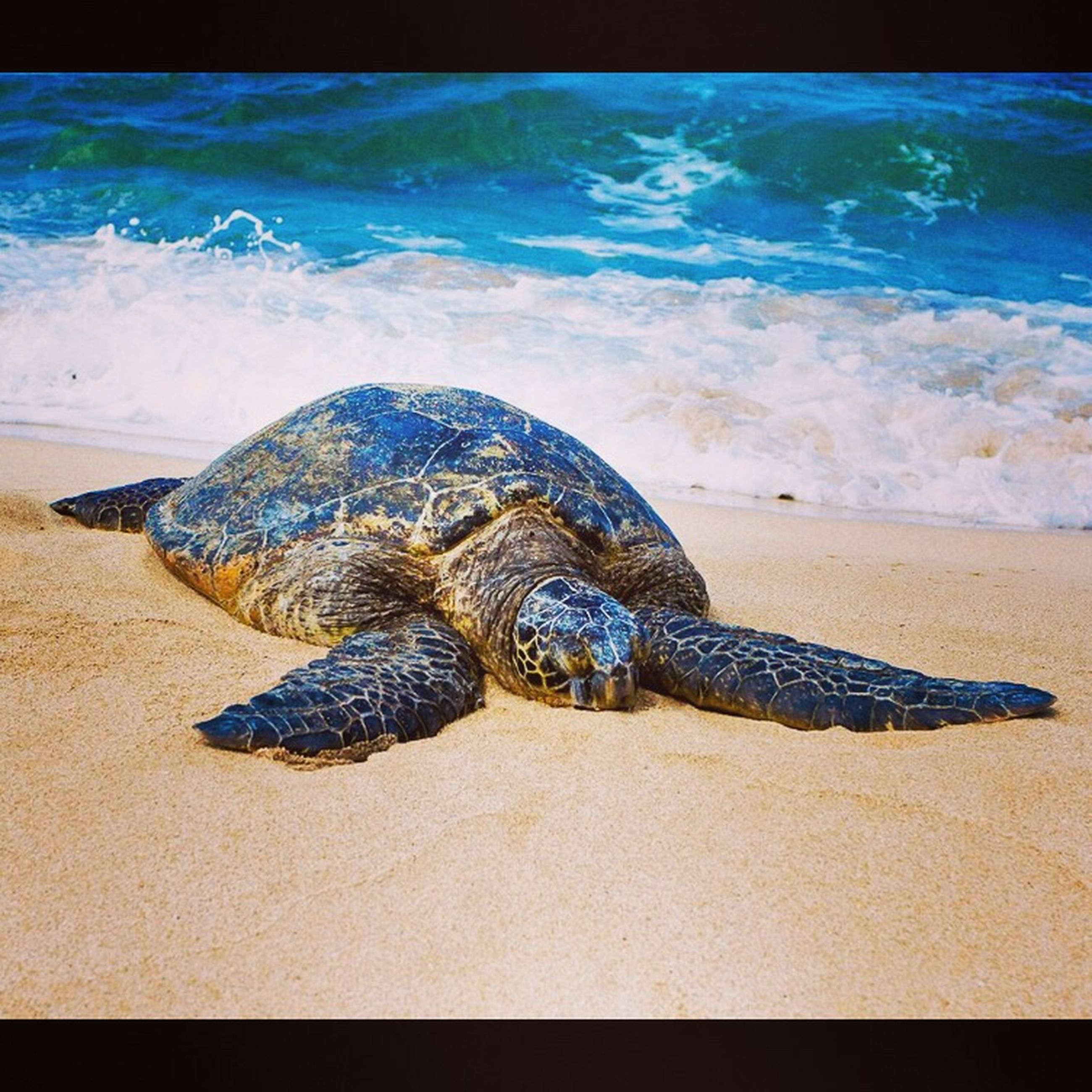 water, sea, animal themes, one animal, beach, animals in the wild, wildlife, sand, sea life, blue, shore, swimming, high angle view, nature, animal shell, reptile, turtle, beauty in nature, day, outdoors