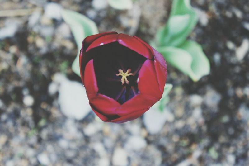 Flowers,Plants & Garden Flowers Flowerporn Macro_flower