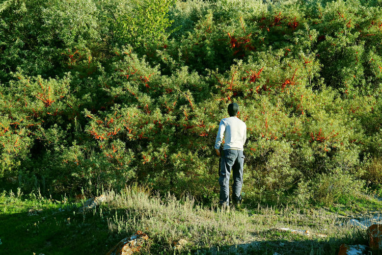 Rear view of man standing by tree on land
