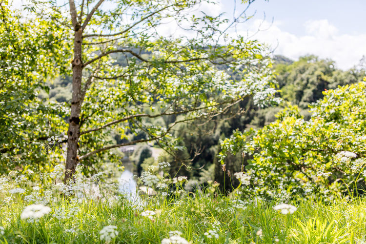 Backgrounds Beauty In Nature Day Flowers Green Historic Luxembourg Mountainous Nature Outdoors Selective Focus Town