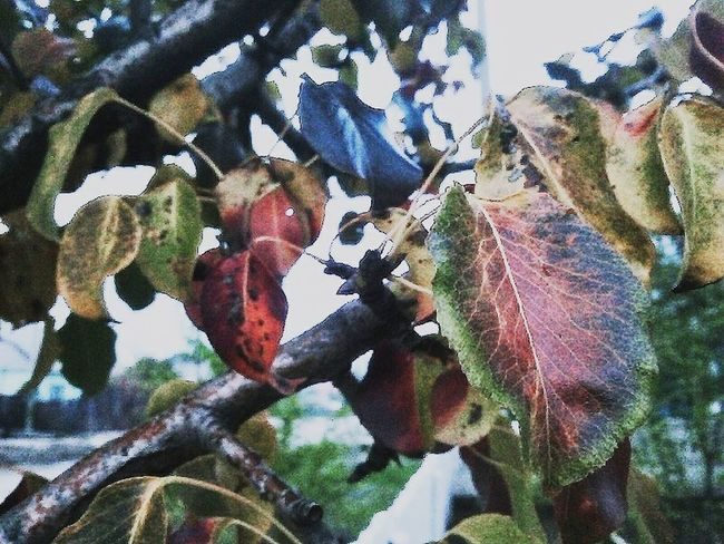 осень прекрасна 🌾🍂🍃 Day Beauty In Nature Low Angle View Leaf Nature No People Close-up Tree Growth Day Plant Outdoors Beauty In Nature Fragility Animal Themes Freshness First Eyeem Photo