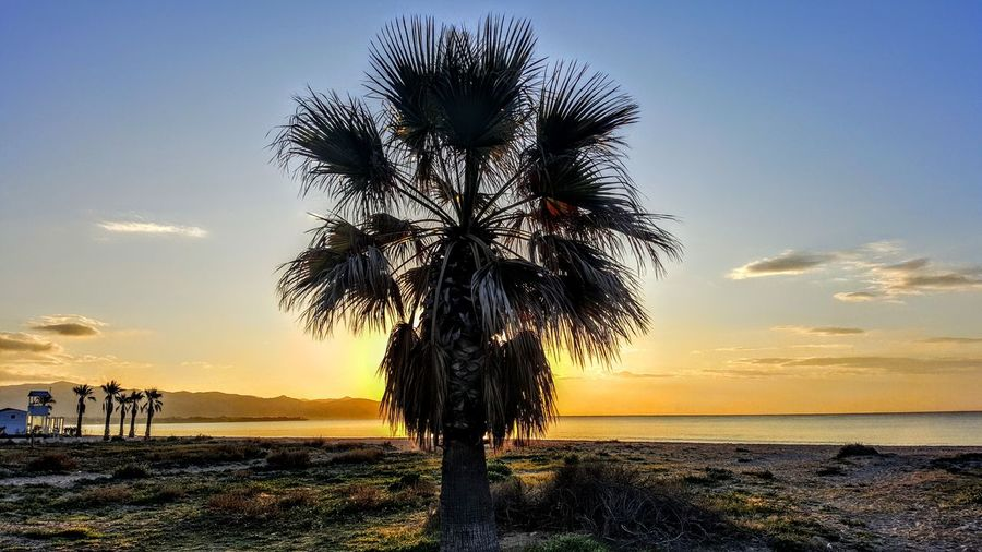 Palm Tree On Beach Against Sky During Sunset