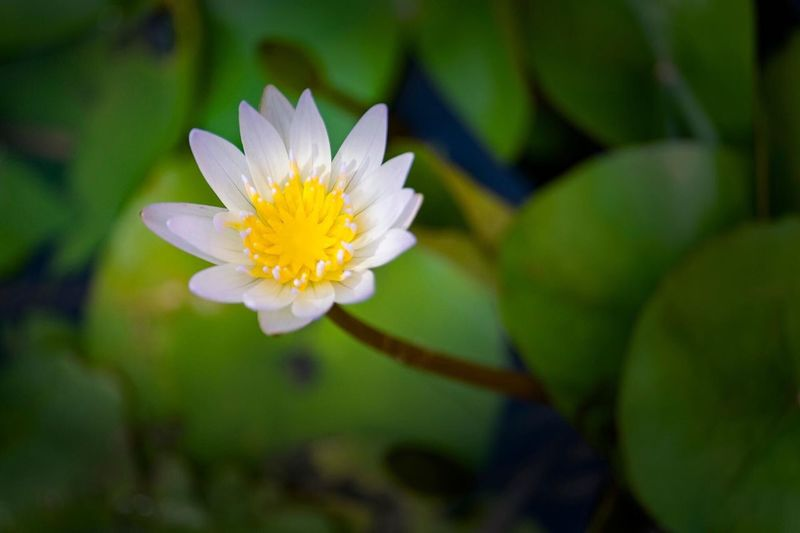 """""""Lonely Lotus"""""""
