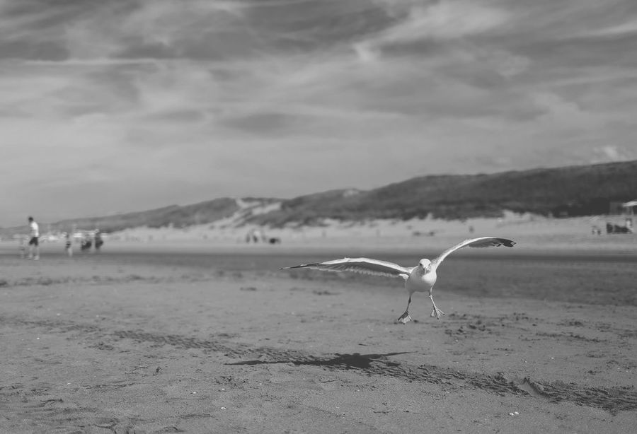 Animal Themes Animal Wing Animals In The Wild Avian Beach Beauty In Nature Bird Cloud Flying Focus On Foreground Nature Non-urban Scene One Animal Perching Sand Scenics Sea Sea Bird Seagull Sky Surface Level Monochrome Photography Tranquility Wildlife Zoology Welcome To Black