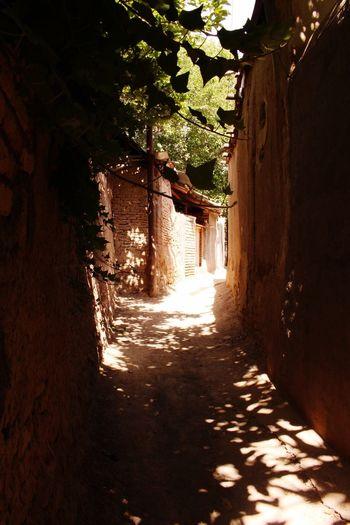 Beautiful Iran Qom Qomkids Qomiha Qahan Nautre Tree Green Color Leefs Shadow Light Light And Shadow Hanging Out