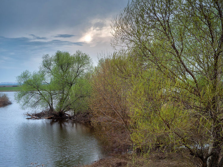 Russia, tourism, Oka River, spill, spring Russia Bare Tree Beauty In Nature Cloud - Sky Day Forest Growth Land Nature No People Non-urban Scene Oka River Outdoors Plant River Scenics - Nature Sky Spill Spring Tourism Tranquil Scene Tranquility Tree Water Waterfront