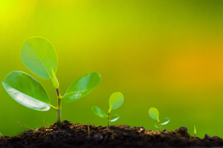 Beauty In Nature Beginnings Close-up Copy Space Day Dirt Field Fragility Gardening Green Color Growth Leaf Nature New Life No People Outdoors Plant Plant Part Planting Sapling Seedling Small Vulnerability