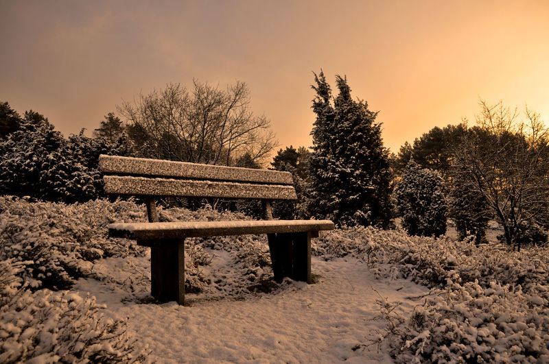 Empty Bench On Snow Covered Field By Trees Against Clear Sky