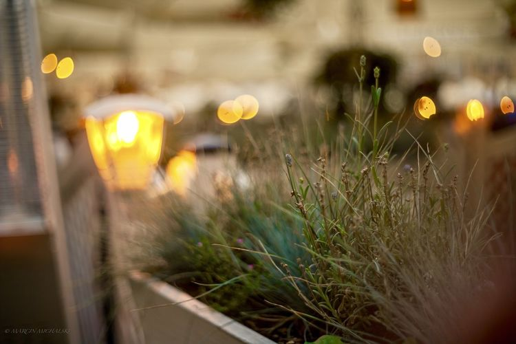 Close-up of illuminated plants on street