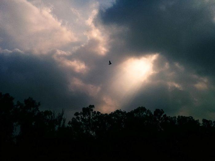 Cloud - Sky Outdoors Bird Of Prey No People Flying Bird Nature Day Sky Rain Day Cloudscape BeautifulClouds!