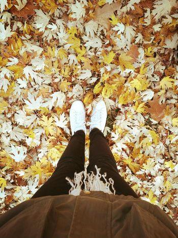 Love maple leaves so much~💛 Maple Leaf Maple White Shoes Beauty In Nature Atumn EyeEmNewHere