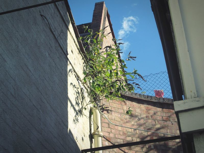 I love this old building... Its Art Deco And.. e very time I shoot it I see something new, that excites me Architecture Sky Low Angle View Cable No People Building Exterior Blue Day Growth Light And Shadow Shadows Plant Life Beauty In Nature Outdoors Shadow Fine Art Photography Abstract Weathered Textured  Miles Away The City Light