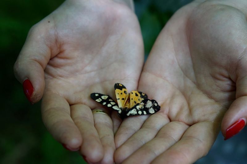 Close-up of human hand holding butterfly