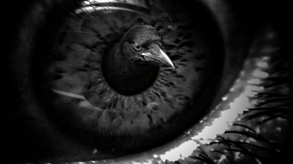 Eye of the beholder. X😨w😦x Light And Shadow Fairytales & Dreams Darkness And Light Dark Fairytale Twisted Dream Mind The Mind Black & White B&w The Bird Condition