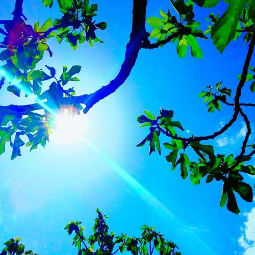 Sunrays Through The Branches Sunray Of Light Sunrays Morning