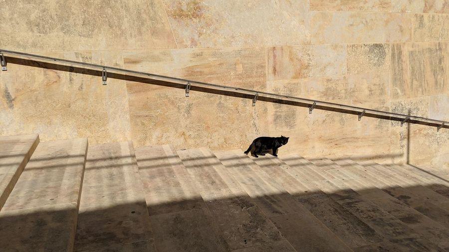 Cat. Black Cat