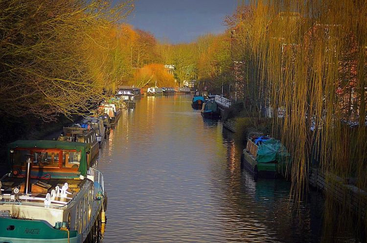 Naturephotography Nature Photography Willow Tree Boats Thames River Nautical Vessel Outdoors Mode Of Transport Transportation Tree Moored