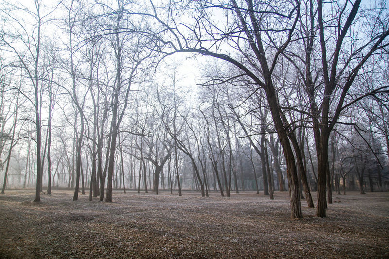Tree Bare Tree Branch Cold Temperature Winter Forest Tree Area Autumn Tree Trunk Deciduous Tree