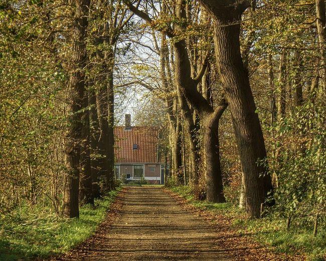 Herfstkleuren Herfstblad Egmond-Binnen, The Netherlands Tree Grass