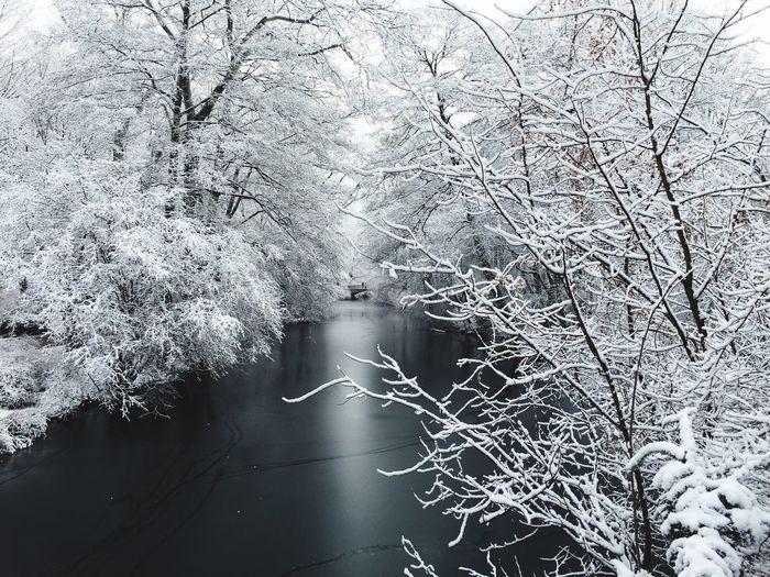 Brücke im Tiergarten