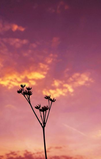 Flower Sunset