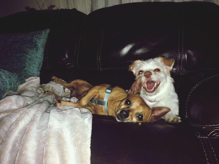 Dog / Pets / Domestic Animals /