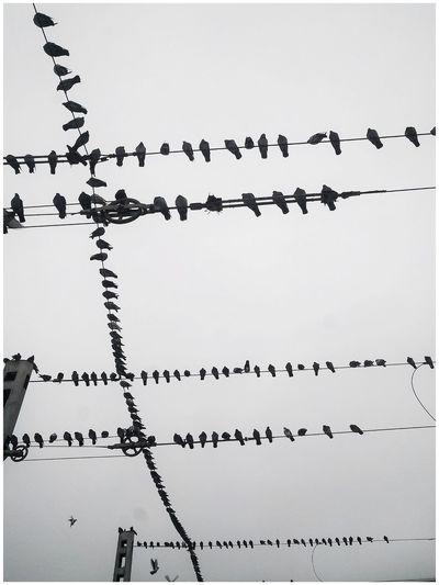 Birds flying against clear sky