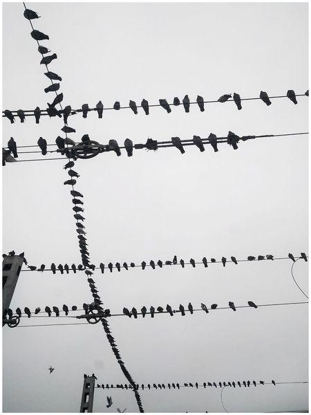 голуби Dove Birds🐦⛅ РЖД транспорныезарисовки