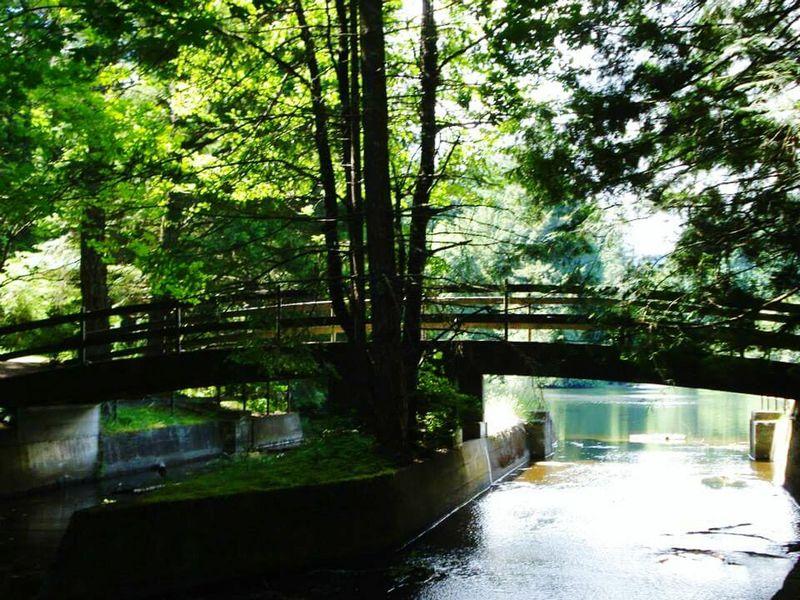 Beautiful Nature Dams Spillway Island Beautiful BC Naturelover Nanaimo BC Naturewalk  Hometown NanaimO