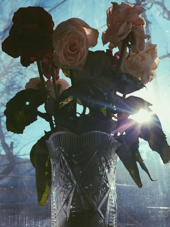 Bouquet of fading roses is standing in a crystal vase near the window Beautiful Beauty Bouquet Cernuous Colorful Crystal Crystal Clear Fading Fading Beauty Flower Flower Head Herbarium Illuminated Leaf Light Low Angle View Nature Petal Ray Of Light Roses Rotting Shadow Standing Vase Winter Sky