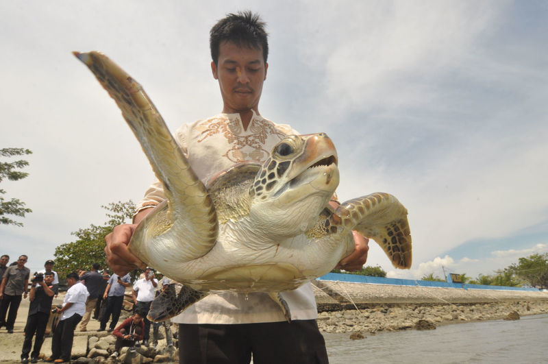 Indonesian release Sea Turtle_ Beach Day Holding Land Leisure Activity Lifestyles Men Nature Outdoors People Real People Representation Sculpture Sea Sky Water Young Adult
