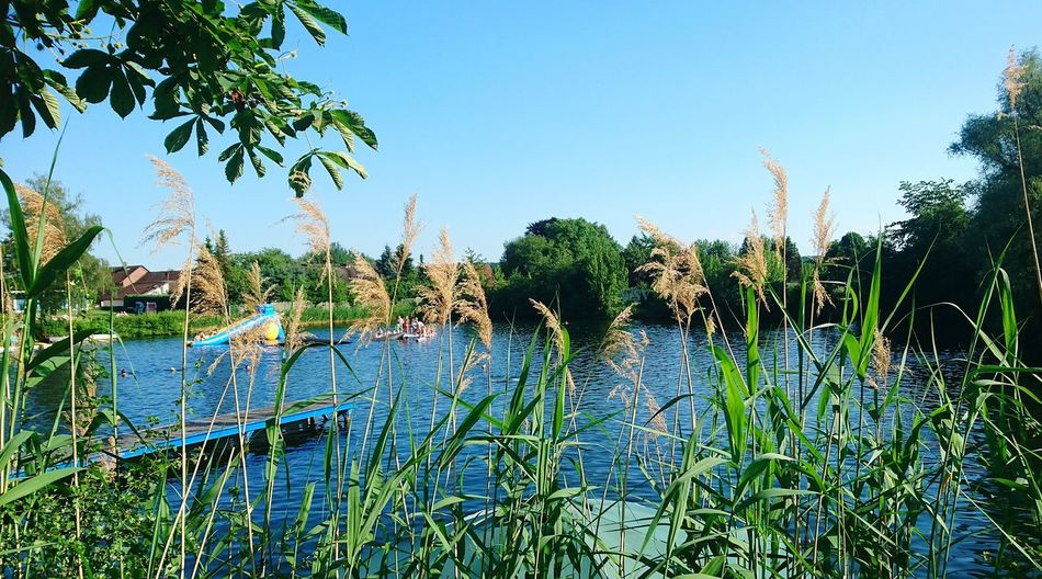 Heute abend am Fümmelsee, Naturschwimmbad bei Wolfenbüttel Growth Nature Water Outdoors Day Tree Plant Sky No People Spraying Clear Sky Blue Beauty In Nature Freshness