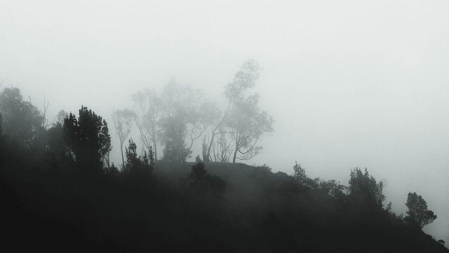 Coorg Madikeri Trees Mist Fog Raja Seat Lonely Man Sitting