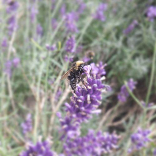 Busybee Bee Havingadrink