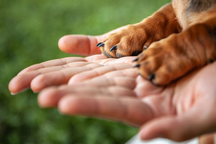 Human Hand Hand Human Body Part Mammal Pets Domestic Domestic Animals Young Animal Close-up Selective Focus People Dog Canine Pet Owner Human Limb Puppy Paws