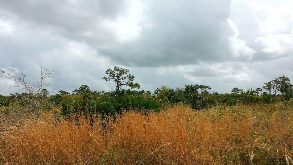 Florida Beauty Landscape Cloudscapes
