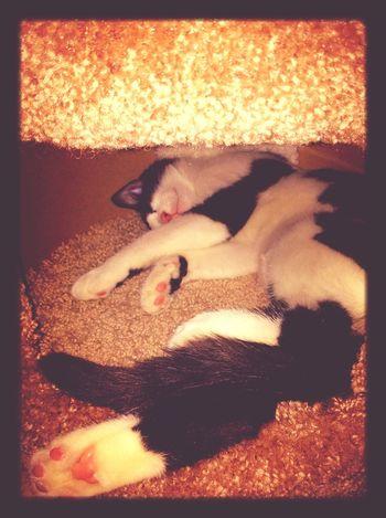 Cat EyeEm Best Shots Cute Pets Love ^.^