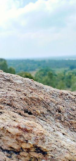 Forest Forest Photography Foest🌳 Hill Algae Super Oppo Photographer Rock Close-up Landscape Marram Grass