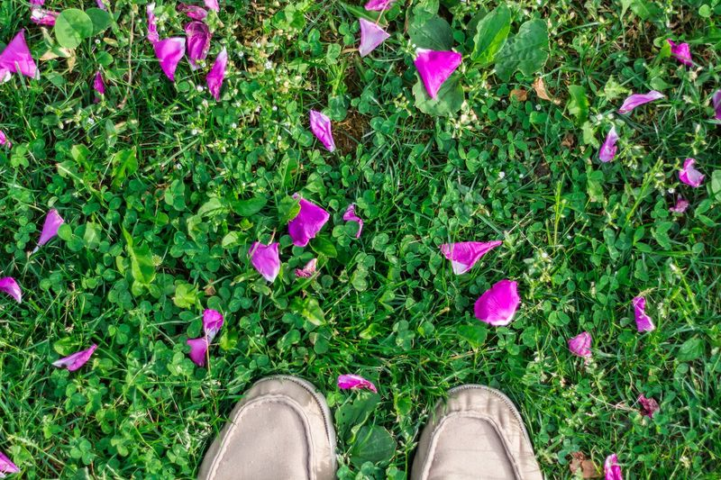 Body Part Day Field Flower Flowering Plant Grass Green Color High Angle View Human Body Part Human Foot Human Leg Land Low Section Nature One Person Outdoors Personal Perspective Pink Color Plant Purple Real People Shoe Standing