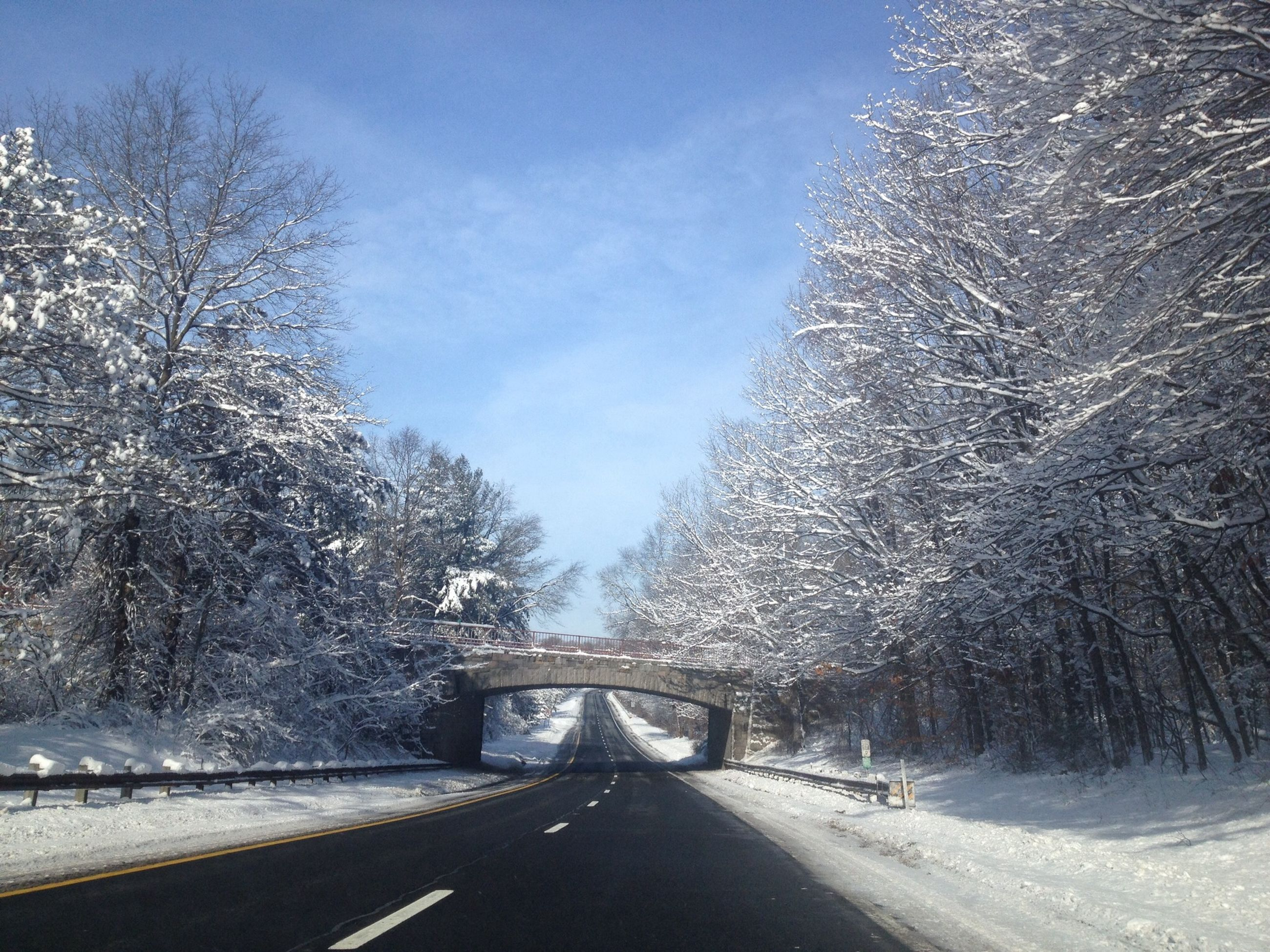 snow, winter, cold temperature, the way forward, transportation, season, road, tree, weather, diminishing perspective, vanishing point, covering, sky, frozen, nature, street, empty road, road marking, bare tree, covered