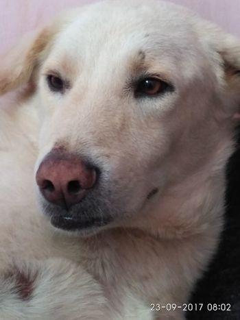 Dog Pets Domestic Animals Looking At Camera Close-up Beauty