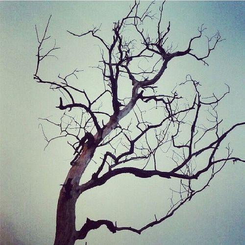 Dead Tree ... DeadMemories :(